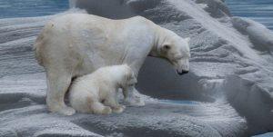 Polar bear and baby - Arctic